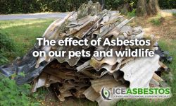 The Effect of Asbestos on your Pets and Wildlife
